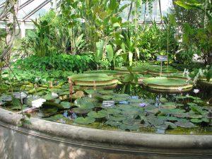 Jardín botánico de Lyon, estanque de las Victoria regia.